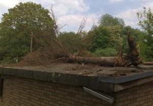 Wegen A100 gefällter Baum auf Laube in Kleingarten Neukölln