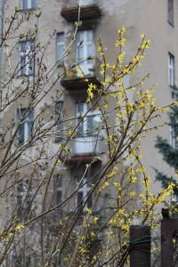 beermannstraße5